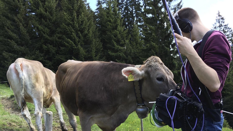 ZDF, Frühstücksfernsehen, ulmedia, Volle Kanne, Kuh, Tonmann