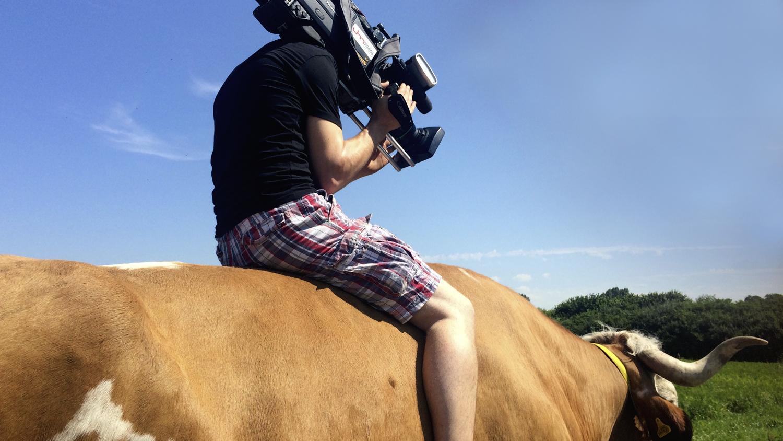 ZDF, Volle Kanne, Kameramann, Therapieochse Ringo, Filmproduktion